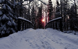 Preview wallpaper Winter, bridge, trees, thick snow, sunset
