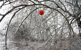 Winter, one red apple, tree, twigs, snow