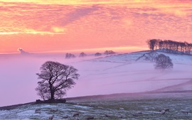 Winter, sheep, clouds, fog, trees, red sky, sunset