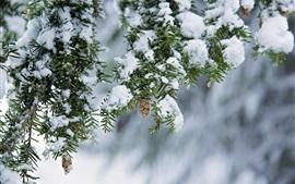 壁紙のプレビュー 冬、雪、小枝