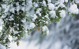 Winter, snow, twigs