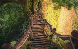 Wooden bridge, gorge, trees