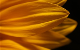 Preview wallpaper Yellow petals flower macro photography