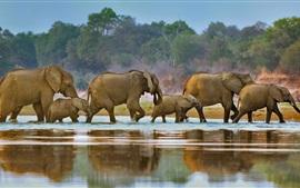 África, elefantes, caminar, río, Luangwa, Zambia