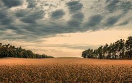 Preview wallpaper Autumn, field, trees, clouds, dusk