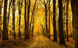 Preview wallpaper Autumn, forest, trees, path