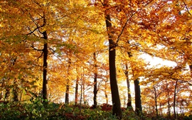 Preview wallpaper Autumn, forest, trees, yellow leaves