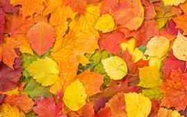 Outono, folhas vermelhas e amarelas, chão