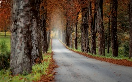 Autumn, road, trees, morning