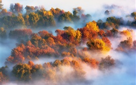 Autumn, trees, fog, morning