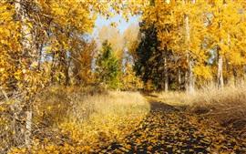 Otoño, árboles, hierba, sendero