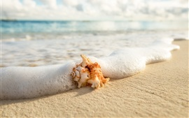 Preview wallpaper Beach, sea, foam, seashell
