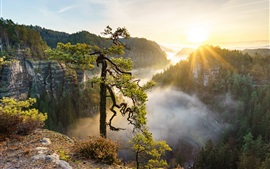 Preview wallpaper Beautiful nature landscape, trees, mountains, fog, sun rays
