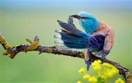 Close-up de pássaro, cauda, ramo de árvore