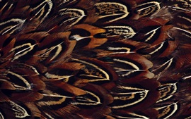 Preview wallpaper Bird feathers macro photography