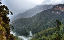 Preview wallpaper Blue Mountains, Australia, Sydney, forest, trees, fog