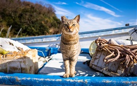Preview wallpaper Cat front view, boat