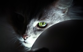 Preview wallpaper Cat green eyes, light