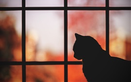 Preview wallpaper Cat, window, silhouette