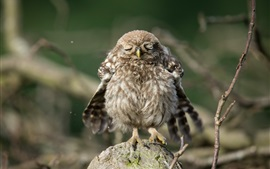 Preview wallpaper Cute little owl to sleep