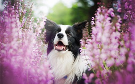 Dog and pink flowers, blurry