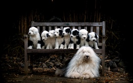 Dog and puppies, family