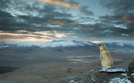 Preview wallpaper Dog sit to look landscape, mountains, clouds
