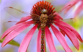 Dragonfly, pink flower