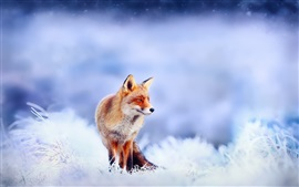 Preview wallpaper Firefox, snow, winter