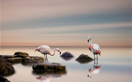 Preview wallpaper Flamingo, birds, lake, stones