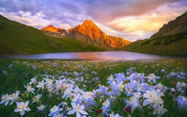 Preview wallpaper Flowers, lake, mountains, clouds, sun
