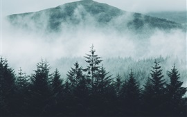 Preview wallpaper Forest, mountains, fog, morning, nature landscape
