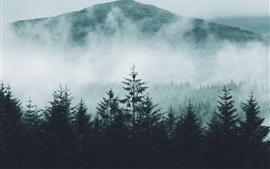 Forest, mountains, fog, morning, nature landscape