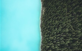 Preview wallpaper Forest, trees, lake, top view