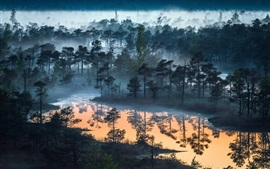 Forest, trees, river, dusk, fog