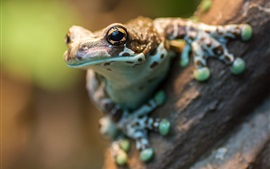 Preview wallpaper Frog macro photography