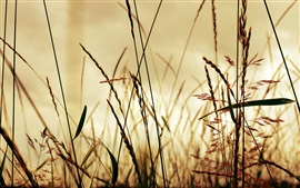 Preview wallpaper Grass, light, glare