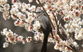Preview wallpaper Gray bird, flowers tree