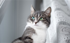 Preview wallpaper Gray cat, green eyes, room