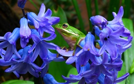 Preview wallpaper Green frog, blue flowers