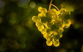 Preview wallpaper Green grapes, glare, backlight