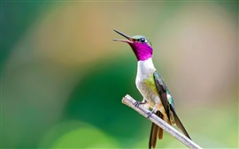 Preview wallpaper Hummingbird, bird, beak, tree branch