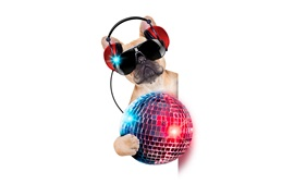 Preview wallpaper Humor, funny dog, headphones, glasses, colorful ball