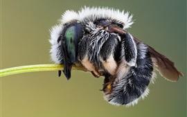 Inseto, fotografia macro de mosca doméstica
