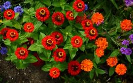 Pequenas flores, vermelho rosa e azul