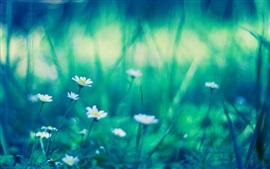 Маленькие белые цветы, зеленый, размытый фон