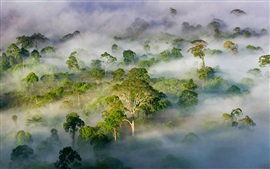 Preview wallpaper Malaysia, Sabah, beautiful nature landscape, forest, trees, fog