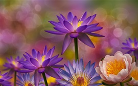 Many water lilies, flowers macro photography