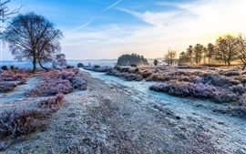 Morning, grass, trees, road, frost, cold