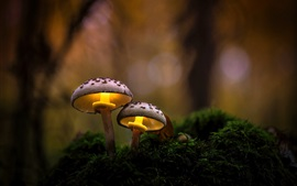 Preview wallpaper Nature, mushrooms, grass, forest